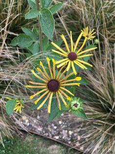 Camilla Hiley - Garden and Landscape Designer - Salisbury, Wiltshire UK Landscape Design, Autumn, Create, Garden, Plants, Fall, Garten, Flora, Plant