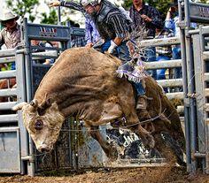 Bull ridin'