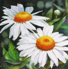 images of flower painting | White Daisies – small flower painting in watercolor by Doris Joa