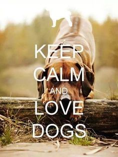 <3 Keep Calm and Love Dogs!