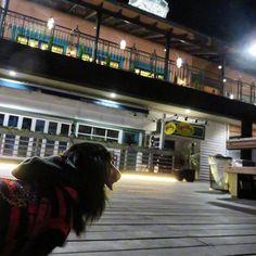 (水)夜のumieMOSAIC2Fの神戸港を眺める「 海の広場 」神戸ポートタワーや、MOSAIC大観覧車が消灯する遅い時間です✨#eggsn_things さんのオープンエリアの床の照明は、閉店後もキラキラしてるので、おーちゃんと振り返って見つめてしまいます #おーちゃんです(´▽`)#dog#miniaturedachshund #KOBEHARBORLAND#kobe_port#how_lovely#umieMOSAIC#神戸#神戸ハーバーランド #神戸港#夜景#望楼#ミニチュアダックス#ブラックタン#愛犬#ペット#わんこ#可愛い
