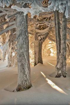 Snö i skogen. Vackert!