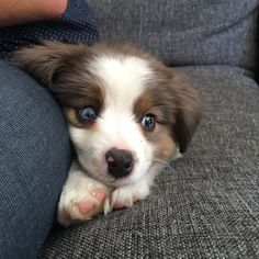 21 Pictures Of Puppies To Help You Get Through Today – #5. They're small, and they're full of love and wonder. http://www.pindoggy.com/pin/9440/