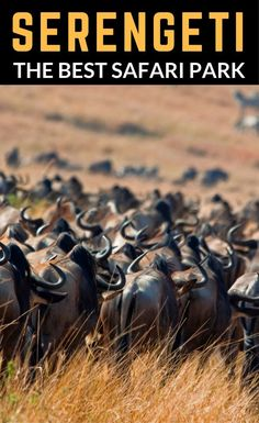 SafariBookings.com has published the definitive list ofAfrica�s best safari parks. The in-depth study analyzed more than 3,000 reviews from safari tourists and industry experts alike. After careful consideration, Serengeti National Park in Tanzania was r