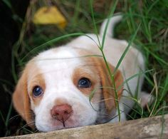How cute is this puppy?