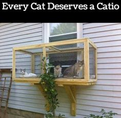 Great way to give your cats access to the great outdoors if youve just moved, i think, while theyre getting aclimatised. Would need to be far bigger tho if you were out in the city and trying to keep them safe from traffic.