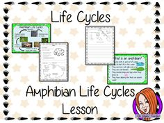 Life Cycles of a Frog Complete Science Lesson Science Classroom, Teaching Science, Classroom Activities, Classroom Ideas, Science Fun, Life Science, Science Experiments, Science Ideas, Bird Life Cycle