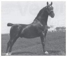Dutch Harness Horse foundation stallion Ebert (born in 1916)