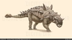 Ankylosaur dinosaur, artwork - stock photo