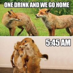 When you make a pact with your friends that you're ONLY HAVING ONE DRINK, but then you all end up wasted and raging...