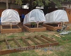 Hometalk :: DIY Greenhouse For Raised Garden Beds