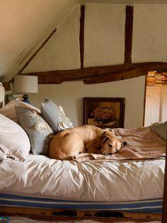 Keltainen talo rannalla: Koiria ja vintagea...