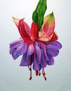 bloom 05 by on DeviantArt Floral Drawing, Watercolor Drawing, Watercolor Flowers, Watercolor Paintings, Botanical Drawings, Botanical Illustration, Watercolor Illustration, Colored Pencil Artwork, Color Pencil Art