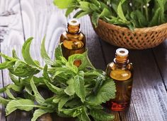 43 Unbelievable Peppermint Oil Uses For Health, Home & Beauty ...... Also, Go to RMR 4 awesome news!! ...  RMR4 INTERNATIONAL.INFO  ... Register for our Product Line Showcase Webinar  at:  www.rmr4international.info/500_tasty_diabetic_recipes.htm    ... Don't miss it!