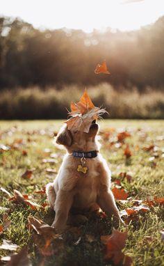 Catch a falling leaf!
