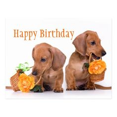 Happy Birthday Dachshund, Happy Birthday Animals, Happy Birthday Pictures, Happy Birthday Funny, Happy Birthday Quotes, Happy Birthday Greetings, Animal Birthday, Happy Birthday With Dogs, Funny Dachshund Pictures