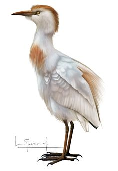 Bird, Animals, Illustrations, Drawings, Animales, Animaux, Birds, Animal, Animais