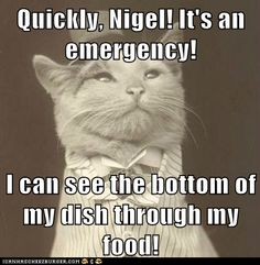 Quickly, Nigel! It's an emergency!  I can see the bottom of my dish through my food!