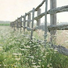 This landscape photograph was taken at the side of a country road in Ontario Canada. This photograph depicts a long rustic farm fence surrounded