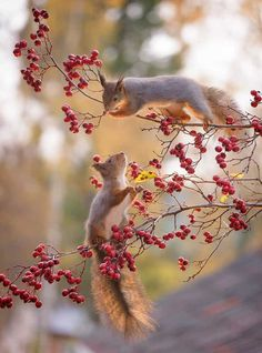 Squirrels Show Up At Photographer's Studio Every Day For 6 Years, So He Takes The Most Amazing Photos - Eichhörnchen und Erdmännchen - Animals Squirrel Pictures, Animal Pictures, Nature Animals, Animals And Pets, Autumn Animals, Wildlife Nature, Wildlife Photography, Animal Photography, Beautiful Creatures