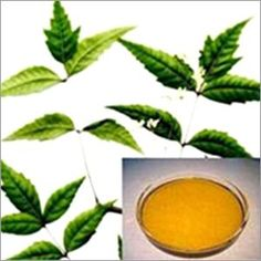There are a myriad of tea tree oil benefits in today's society. Everything from acne treatments to clearing the air. Tea tree oil is a necessity in one's arsenal of natural medicinal products. Oils For Dandruff, Home Remedies For Dandruff, Herbal Remedies, Natural Remedies, Tea Tree Oil Uses, Tea Tree Oil For Acne, Dandruff Solutions, Neem Oil, Oil Benefits
