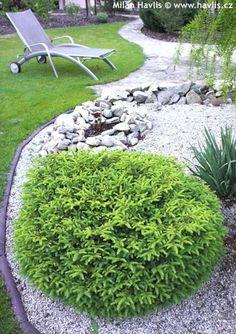 1000 images about zone 3 shrubs on pinterest shrubs for Low maintenance evergreen shrubs