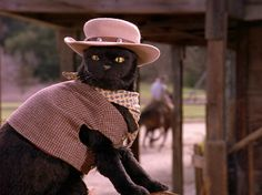 Sabrina the Teenage Witch Salem Cat, Salem Saberhagen, Witch Cat, My Spirit Animal, My Horse, Reaction Pictures, Funny Comics, Cat Memes, Cool Cats