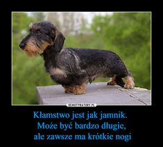 Text Memes, Dachshund, Haha, Humor, Funny, Motto, Animals, Sweet, Quotes