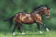 Bruce, horse portrait. 16x12 inches, pastels.
