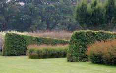 Sculpted hedges at Sussex Prairies