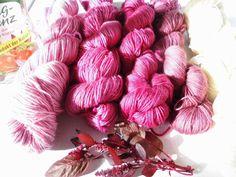 .......Rosendame macht was: Amaranthfärbung vom November