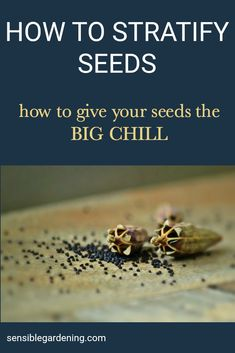 Learn how to stratify seeds to bring them out of dormancy. Trick mother nature by giving your seeds the Big Chill treatment.