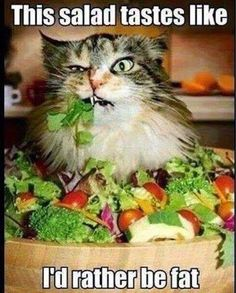 This salad tastes like I'd rather be fat.