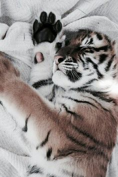 ☾ ωe αll нαve secяeтs // J A Z ♡ ☽ – Jess - Baby Animals Animals And Pets, Funny Animals, Cute Little Animals, Cute Animal Pictures, Cute Creatures, Animal Photography, Vintage Photography, Animals Beautiful, Cute Cats