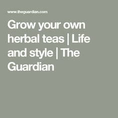 Grow your own herbal teas | Life and style | The Guardian