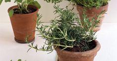 Remédios caseiros para livrar suas plantas de mosquitos pretos pequenos