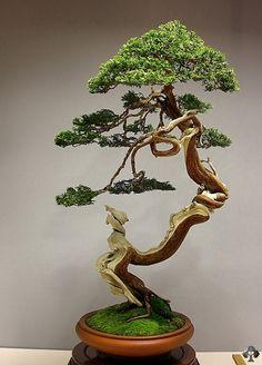 38 Best Bonsai 盆栽 Images Bonsai Garden Bonsai Trees Bonsai Plants