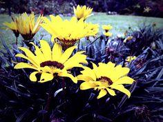 #Beauty #flower #yellow