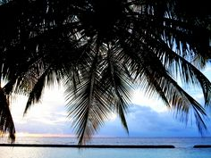 Palm tree and sunset on a beach in the Maldives. Bluesails Sportfishing Pins www.bluesailsrompin.com