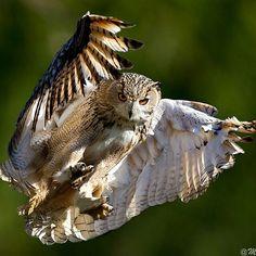 Observação e voo certeiro e lá vou eu.
