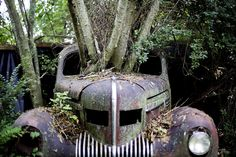 Trees grow through the windshield of a 1937 Chrysler Imperial as it sits at Old Car City, the world's largest known classic car junkyard, on July 16, 2015, in White, Georgia, Many of the cars have never moved in over 30 years and in some cases, trees now grow through them, even lifting some off the ground.