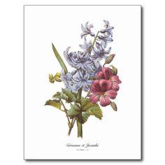 Geranium and Hyacinth