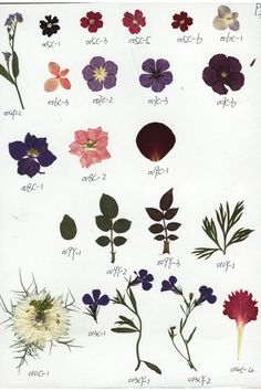 Pressed flowers botanical sheet