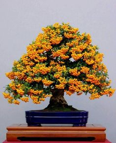 Very colorful bonsai tree. If you are looking for home decor ideas, look no further!