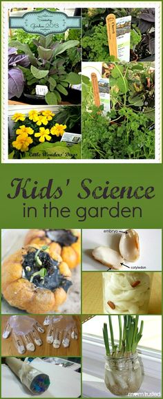 in the Garden Add a little science fun to your gardening with these simple experiments and science activities for kids.Add a little science fun to your gardening with these simple experiments and science activities for kids. Plant Science, Preschool Science, Science Classroom, Teaching Science, Science For Kids, Science Fun, Science Experiments, Summer Science, Science Chemistry
