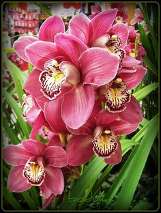 orchid color for fall