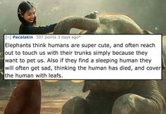 10 Nice Facts That'll Make This World Seem A Little Less Cruel - CollegeHumor Post