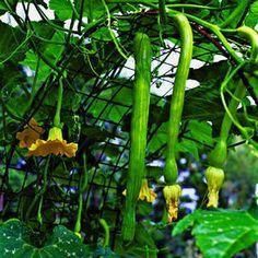 jardins potagers vertical verticaux (11)                                                                                                                                                      Plus