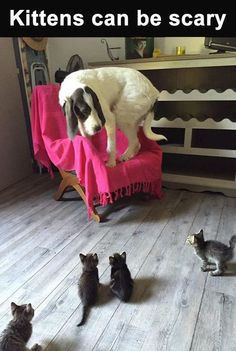 Kittens Can Be Scary Pictures, Photos, and Images for Facebook, Tumblr, Pinterest, and Twitter