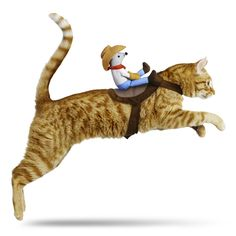 Petco Cowboy Halloween Cat Costume *hahahahaha*